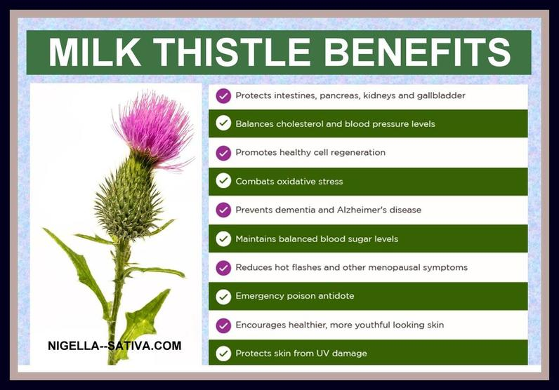 Milk Thistle An Alternative To Black Seed Oil Shows Many